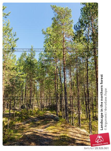 Купить «Landscape in the northern forest», фото № 28926061, снято 18 июля 2018 г. (c) Argument / Фотобанк Лори