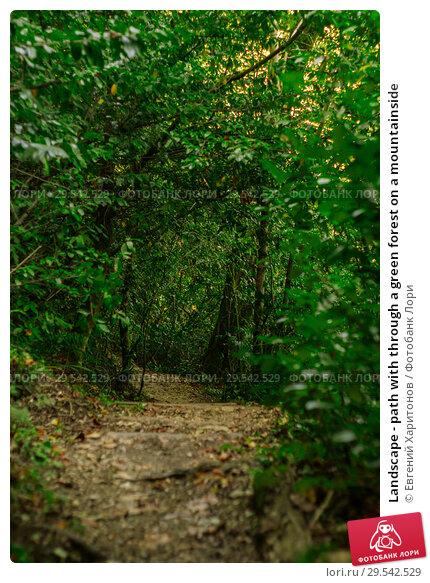Купить «Landscape - path with through a green forest on a mountainside», фото № 29542529, снято 26 сентября 2017 г. (c) Евгений Харитонов / Фотобанк Лори