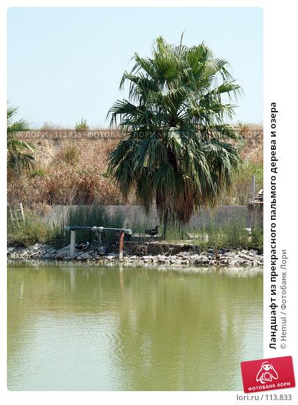 Ландшафт из прекрасного пальмого дерева и озера, фото № 113833, снято 24 июля 2007 г. (c) Hemul / Фотобанк Лори