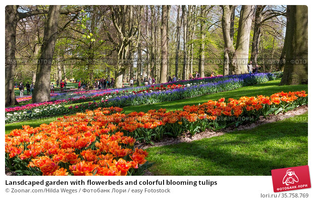 Lansdcaped garden with flowerbeds and colorful blooming tulips. Стоковое фото, фотограф Zoonar.com/Hilda Weges / easy Fotostock / Фотобанк Лори