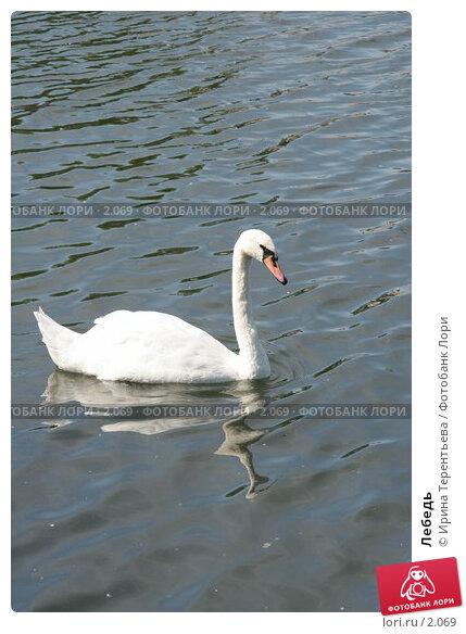 Купить «Лебедь», эксклюзивное фото № 2069, снято 16 июня 2005 г. (c) Ирина Терентьева / Фотобанк Лори