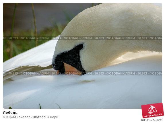 Лебедь, фото № 50693, снято 19 сентября 2006 г. (c) Юрий Соколов / Фотобанк Лори
