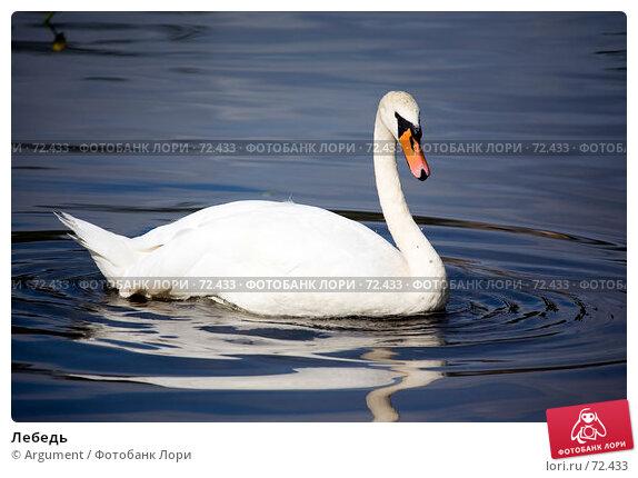 Лебедь, фото № 72433, снято 5 августа 2007 г. (c) Argument / Фотобанк Лори