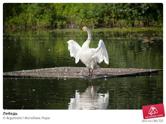 Лебедь, фото № 80721, снято 5 августа 2007 г. (c) Argument / Фотобанк Лори