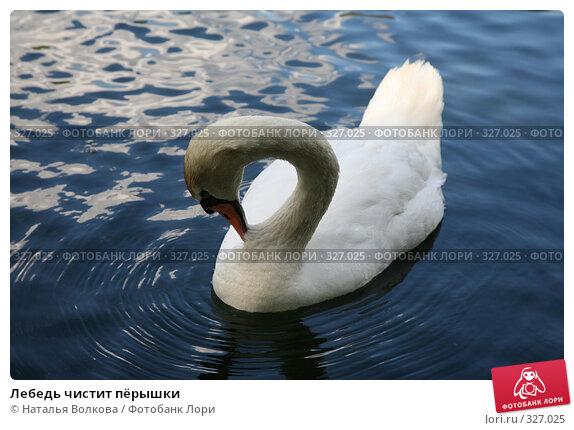 Лебедь чистит пёрышки, эксклюзивное фото № 327025, снято 18 июня 2008 г. (c) Наталья Волкова / Фотобанк Лори