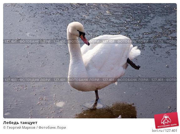 Лебедь танцует, фото № 127401, снято 3 марта 2006 г. (c) Георгий Марков / Фотобанк Лори