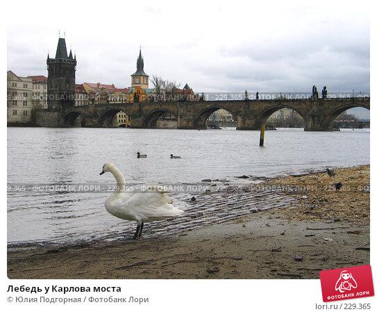 Купить «Лебедь у Карлова моста», фото № 229365, снято 17 марта 2008 г. (c) Юлия Селезнева / Фотобанк Лори