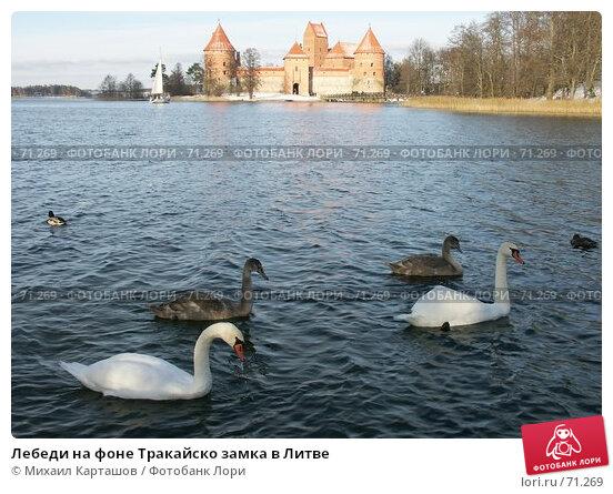 Лебеди на фоне Тракайско замка в Литве, эксклюзивное фото № 71269, снято 5 ноября 2006 г. (c) Михаил Карташов / Фотобанк Лори