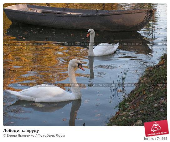 Лебеди на пруду, фото № 74665, снято 1 марта 2005 г. (c) Елена Яковенко / Фотобанк Лори