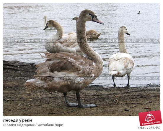 Лебеди у реки, фото № 236489, снято 17 марта 2008 г. (c) Юлия Селезнева / Фотобанк Лори