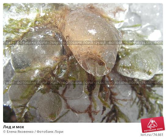 Лед и мох, фото № 74661, снято 1 июня 2005 г. (c) Елена Яковенко / Фотобанк Лори