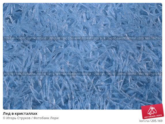 Купить «Лед в кристаллах», фото № 205169, снято 16 февраля 2008 г. (c) Игорь Струков / Фотобанк Лори