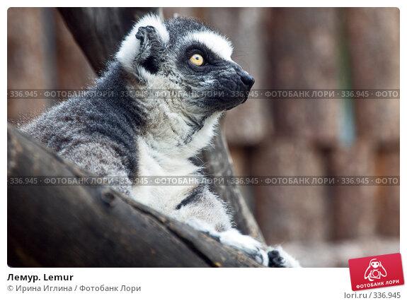 Лемур. Lemur, фото № 336945, снято 21 июня 2008 г. (c) Ирина Иглина / Фотобанк Лори