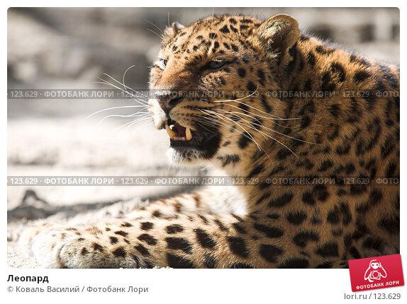 Леопард, фото № 123629, снято 20 апреля 2007 г. (c) Коваль Василий / Фотобанк Лори