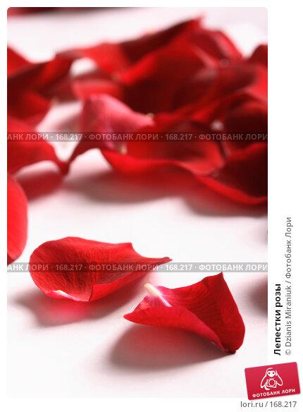 Лепестки розы, фото № 168217, снято 5 января 2008 г. (c) Dzianis Miraniuk / Фотобанк Лори