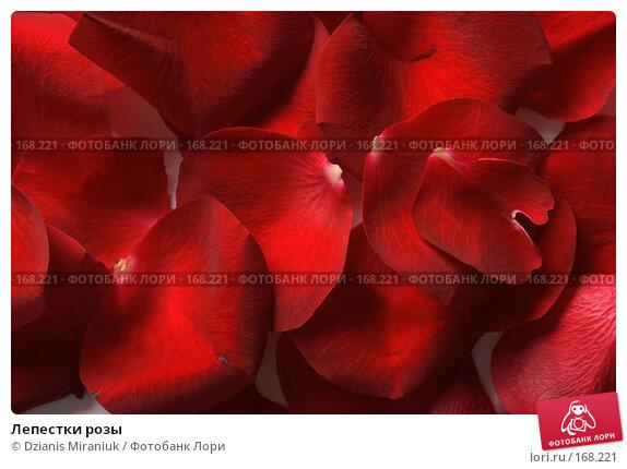 Лепестки розы, фото № 168221, снято 5 января 2008 г. (c) Dzianis Miraniuk / Фотобанк Лори