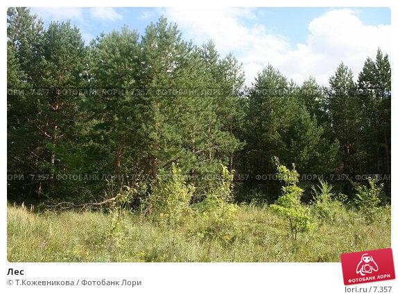 Лес, фото № 7357, снято 16 августа 2017 г. (c) Т.Кожевникова / Фотобанк Лори