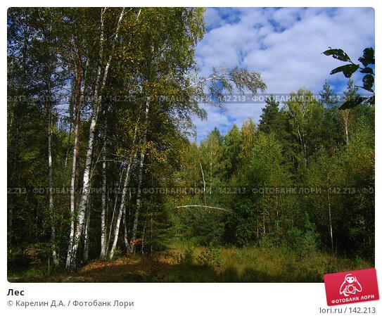 Лес, фото № 142213, снято 6 сентября 2005 г. (c) Карелин Д.А. / Фотобанк Лори