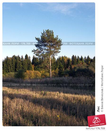 Лес, фото № 176709, снято 21 сентября 2007 г. (c) Бяков Вячеслав / Фотобанк Лори