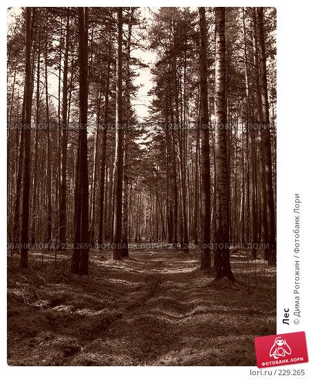 Лес, фото № 229265, снято 6 мая 2006 г. (c) Дима Рогожин / Фотобанк Лори