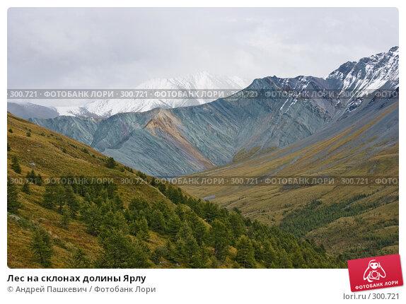 Лес на склонах долины Ярлу, фото № 300721, снято 30 мая 2017 г. (c) Андрей Пашкевич / Фотобанк Лори