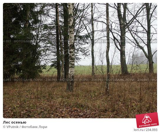 Лес осенью, фото № 234093, снято 5 ноября 2004 г. (c) VPutnik / Фотобанк Лори