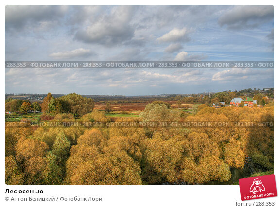 Лес осенью, фото № 283353, снято 17 января 2017 г. (c) Антон Белицкий / Фотобанк Лори