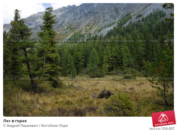 Лес в горах, фото № 310057, снято 26 марта 2017 г. (c) Андрей Пашкевич / Фотобанк Лори