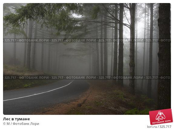 Лес в тумане, фото № 325717, снято 18 августа 2017 г. (c) Михаил / Фотобанк Лори