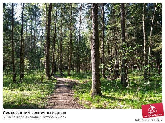 Купить «Лес весенним солнечным днем», фото № 33039977, снято 11 мая 2018 г. (c) Елена Коромыслова / Фотобанк Лори