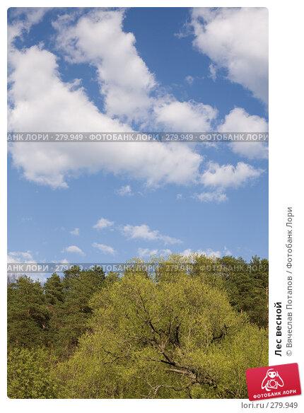 Лес весной, фото № 279949, снято 27 апреля 2008 г. (c) Вячеслав Потапов / Фотобанк Лори