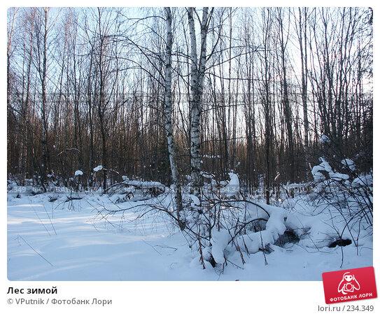 Лес зимой, фото № 234349, снято 25 февраля 2007 г. (c) VPutnik / Фотобанк Лори