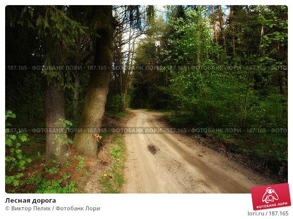 Лесная дорога, фото № 187165, снято 26 октября 2016 г. (c) Виктор Пелих / Фотобанк Лори