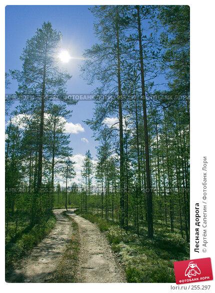 Лесная дорога, фото № 255297, снято 11 июля 2007 г. (c) Артём Сапегин / Фотобанк Лори