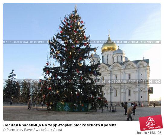Лесная красавица на территории Московского Кремля, фото № 158193, снято 24 декабря 2007 г. (c) Parmenov Pavel / Фотобанк Лори
