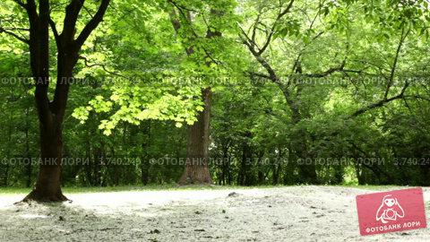 Купить «Лесная поляна, пух кружится в воздухе», видеоролик № 3740249, снято 13 августа 2011 г. (c) Losevsky Pavel / Фотобанк Лори