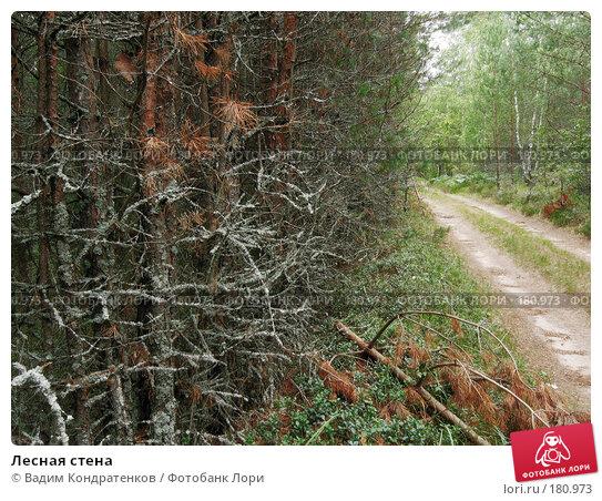 Купить «Лесная стена», фото № 180973, снято 21 апреля 2018 г. (c) Вадим Кондратенков / Фотобанк Лори