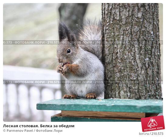 Лесная столовая. Белка за обедом, фото № 210573, снято 13 февраля 2008 г. (c) Parmenov Pavel / Фотобанк Лори