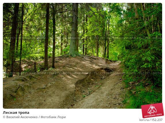 Лесная тропа, фото № 152237, снято 11 июня 2007 г. (c) Василий Аксюченко / Фотобанк Лори