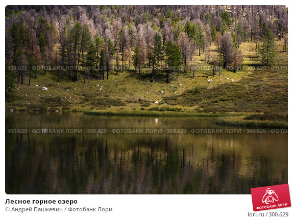 Лесное горное озеро, фото № 300629, снято 25 января 2017 г. (c) Андрей Пашкевич / Фотобанк Лори