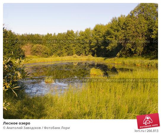 Лесное озеро, фото № 266813, снято 1 августа 2006 г. (c) Анатолий Заводсков / Фотобанк Лори
