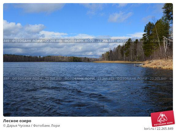 Лесное озеро. Стоковое фото, фотограф Дарья Чусова / Фотобанк Лори