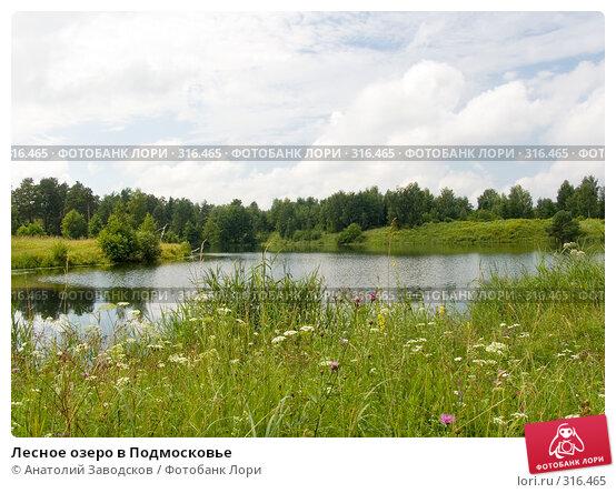 Лесное озеро в Подмосковье, фото № 316465, снято 24 июля 2004 г. (c) Анатолий Заводсков / Фотобанк Лори