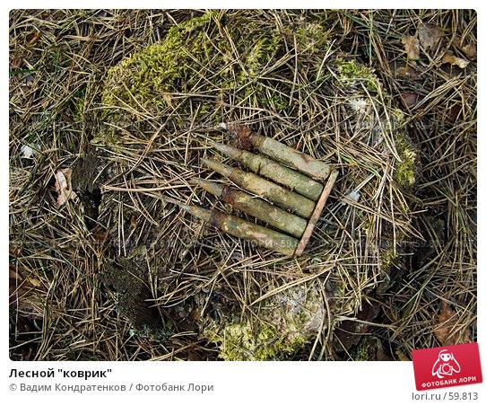 "Лесной ""коврик"", фото № 59813, снято 23 мая 2017 г. (c) Вадим Кондратенков / Фотобанк Лори"