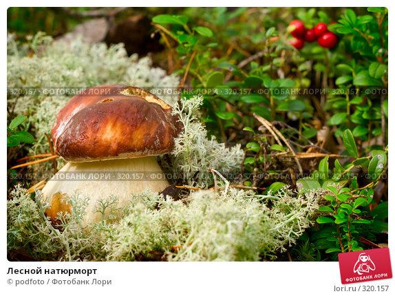 Купить «Лесной натюрморт», фото № 320157, снято 8 сентября 2007 г. (c) podfoto / Фотобанк Лори