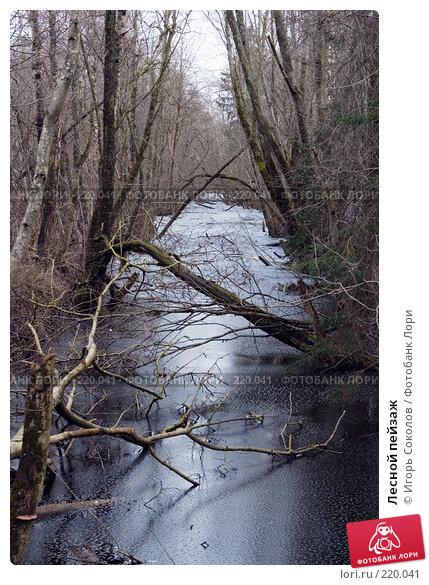 Лесной пейзаж, фото № 220041, снято 1 марта 2008 г. (c) Игорь Соколов / Фотобанк Лори