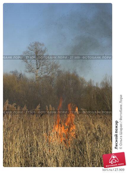 Лесной пожар, фото № 27909, снято 28 марта 2007 г. (c) Ольга Шаран / Фотобанк Лори