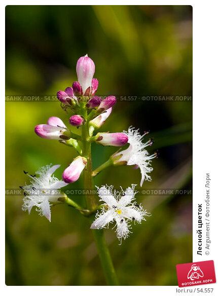 Лесной цветок, фото № 54557, снято 11 июня 2006 г. (c) Argument / Фотобанк Лори