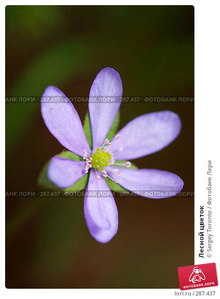 Лесной цветок, фото № 287437, снято 2 мая 2008 г. (c) Sergey Toronto / Фотобанк Лори