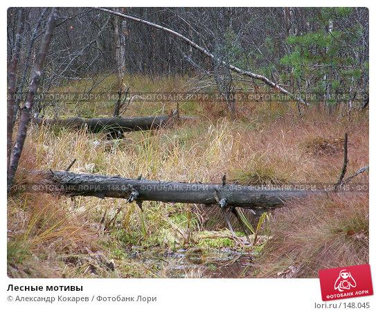 Купить «Лесные мотивы», фото № 148045, снято 3 ноября 2007 г. (c) Александр Кокарев / Фотобанк Лори